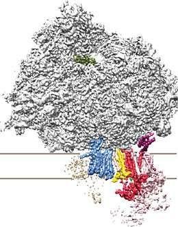 science:从结构上揭示哺乳动物细胞内的蛋白转运