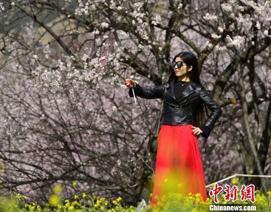 图为内地游客在桃花树下自拍。 周文元 摄