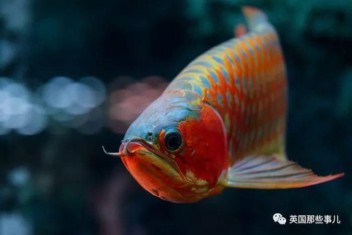 """那一年在""""濒危野生动植物国际贸易大会""""上 水族资讯 南昌水族馆第3张"""