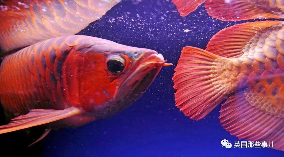 """那一年在""""濒危野生动植物国际贸易大会""""上 水族资讯 南昌水族馆第2张"""