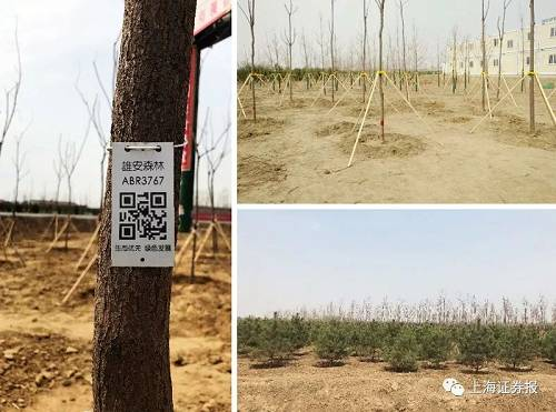 记者现场勘察后发现,路两旁的造林区域有多种树木,其中以油松和西府海棠为主。