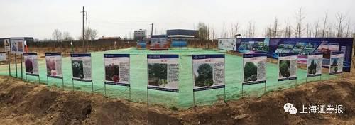 从雄县县城驱车西行,S334省道(也称保静快速路)是通往安新和容城的必经之路。一年前,这条路的两侧还是零零散散的厂房和分散的农田,如今在这条长度约14公里的路旁,上万株苗圃已经安家。