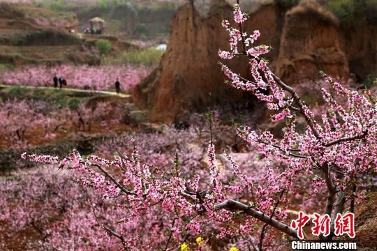 桃花连绵不断,形成花的海洋,前来赏花旅游者络绎不绝。 梁�� 摄