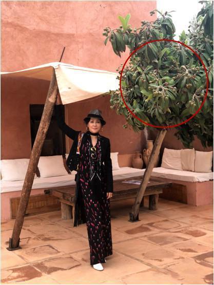刘嘉玲出国游尽显狂野性感 这些细节暴露了她的奢华