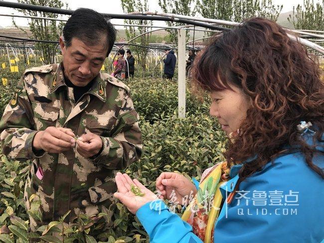 泰安杨家庄村:齐聚茶色茶香之中,纵情茶山茶地之间