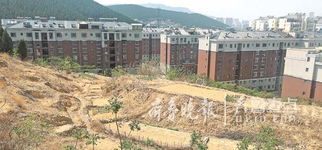 济南山体毁绿种菜屡禁不止这几点原因让