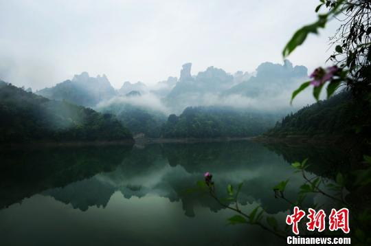 飘逸的云雾在峰林间蜿蜒萦绕。 吴勇兵 摄