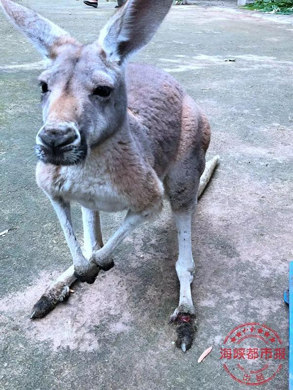 福州动物园内袋鼠被活活砸死,肇事游客如何追责?