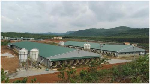 武宣县百万头生猪产业基地