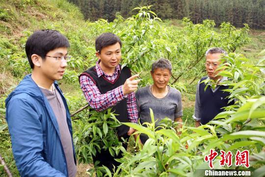扶贫工作小组成员在黄桃基地查看果树长势。 王昊阳摄