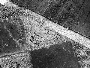 故宫御花园石子被抠走?工作人员:都是最普通的石子