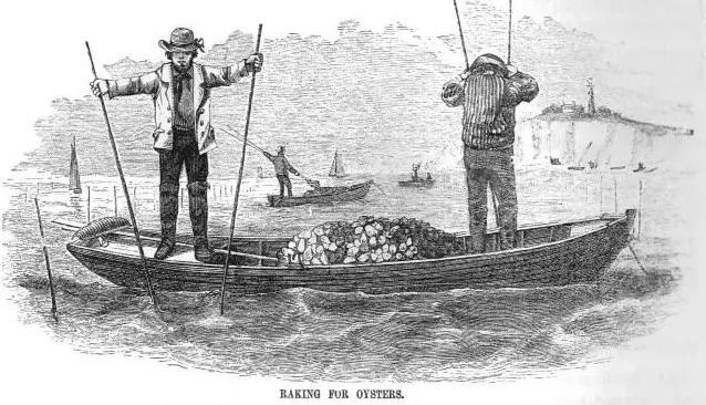 """这种不起眼的疾病让英国""""生蚝大崩溃"""",与美食纠缠百年仍在作恶"""