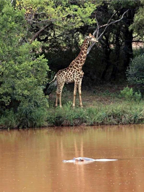 国际级获奖电影摄影师拍摄长颈鹿时被撞致死