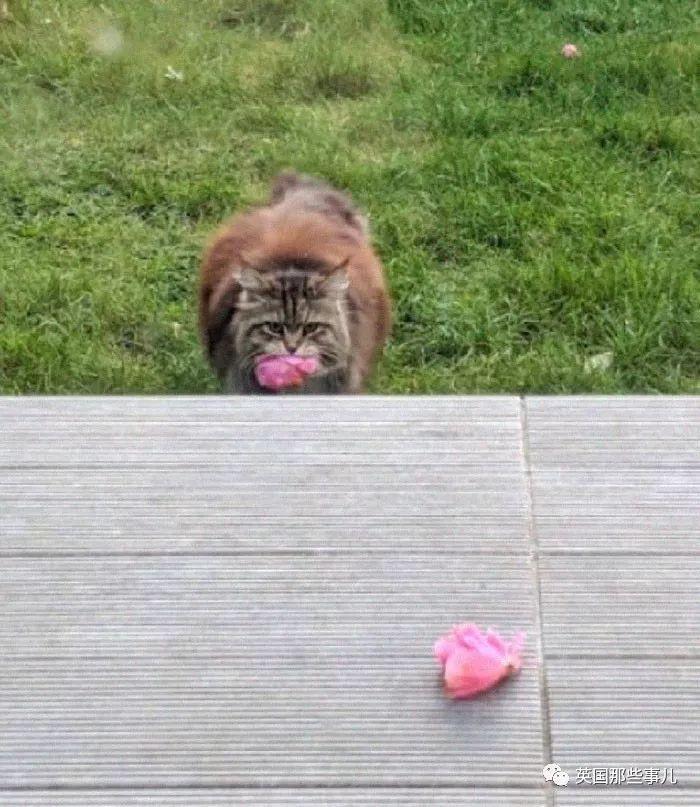 奇闻异事|十几天给你家门口送粉花?这年头,猫都比你会撩妹