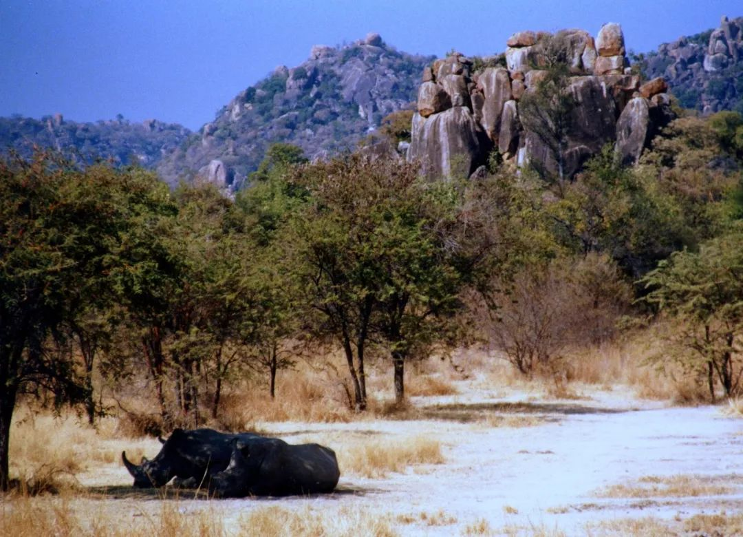 津巴布韦或将开放落地签 这里有全世界最壮丽瀑布!
