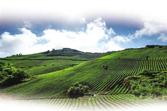 石柱 发展特色农业 助推乡村产业兴旺