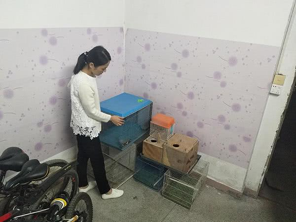 """深圳售卖6只鹦鹉入狱男子获释,妻子说儿子总问""""爸爸去哪儿了"""""""