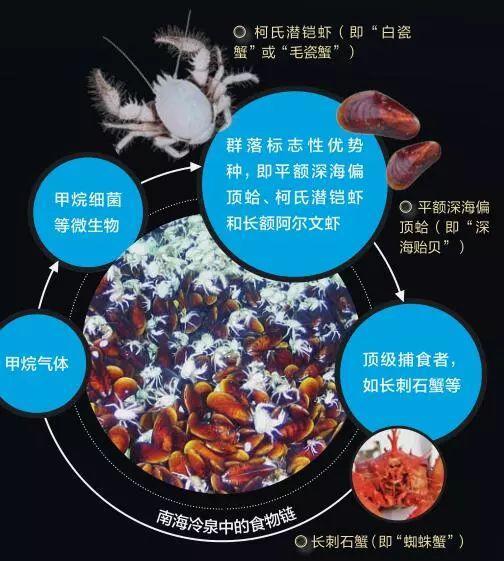 由于热液、冷泉环境在广袤的深海中所占的面积不多,深海中更多的是海盆、海山环境。而海盆、海山环境中生物相对非常稀少,因此有人将深海称为海洋中的沙漠,就是对这两种深海环境而言的。但如同真正的沙漠中,仍然有蚂蚁、蜥蜴、毒蛇甚至狼一样,在深海海盆、海山环境中,仍然有动物在活动。 这里的动物虽然个体稀少,但种类却不少。 由于食物非常稀少,能够在深海生活的动物大都身怀绝技,在寻找食物时各显神通。如深海鱼类大多数都有一张巨大的嘴巴、又尖又长的牙齿和一双特别大的眼睛,一旦有其他鱼类或者动物被它们咬住,便在劫难逃,它们