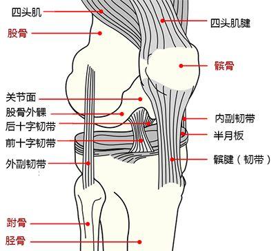口腔骨头结构图