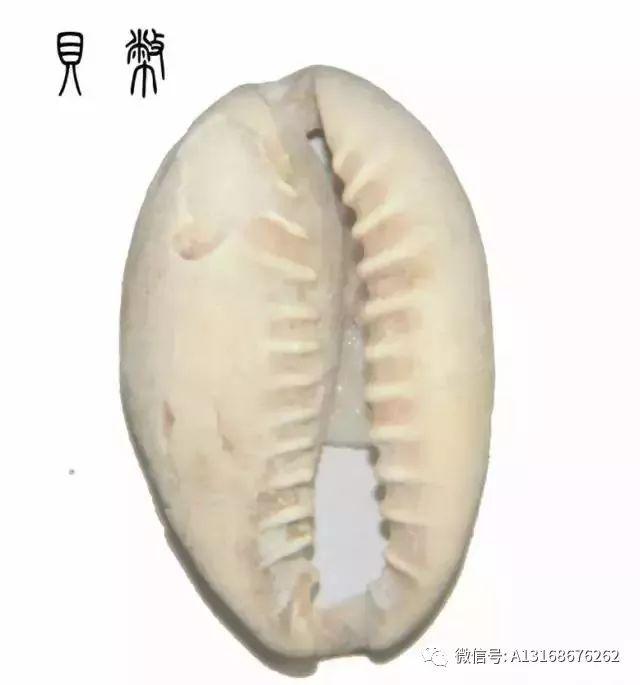 中国最早的那些钱币