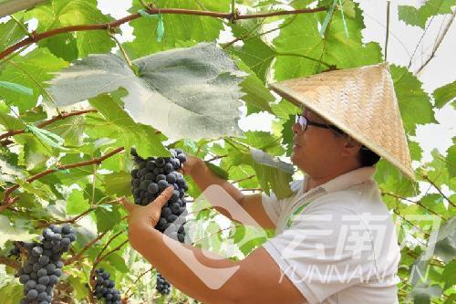 中国邮政昌宁县分公司撸起袖子为农产品走出去加油