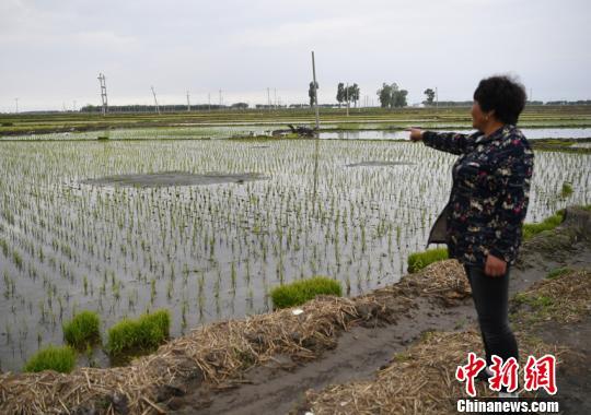 村民指着农田里出现的沙坑张瑶摄