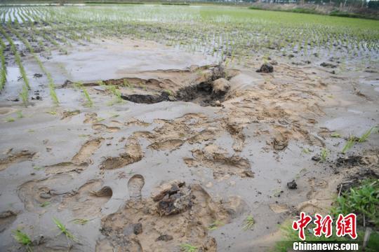 震区部分地区地面出现沙坑张瑶摄