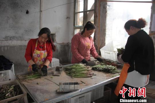 图为村民们正在整理芦笋。 长子县新闻中心王维宁供图摄
