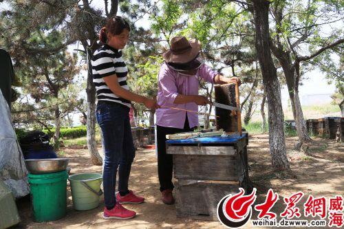 养蜂人年收入_秦岭深处养蜂人年收入7万多元养蜂培训课帮大忙