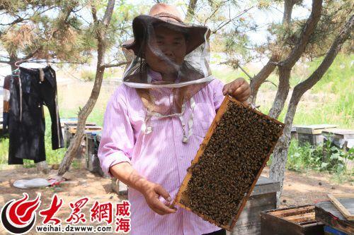 养蜂人的收入_秦岭深处养蜂人年收入7万多元养蜂培训课帮大忙
