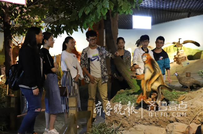 金丝猴朱鹮来了!山东最大动物标本博物馆再添