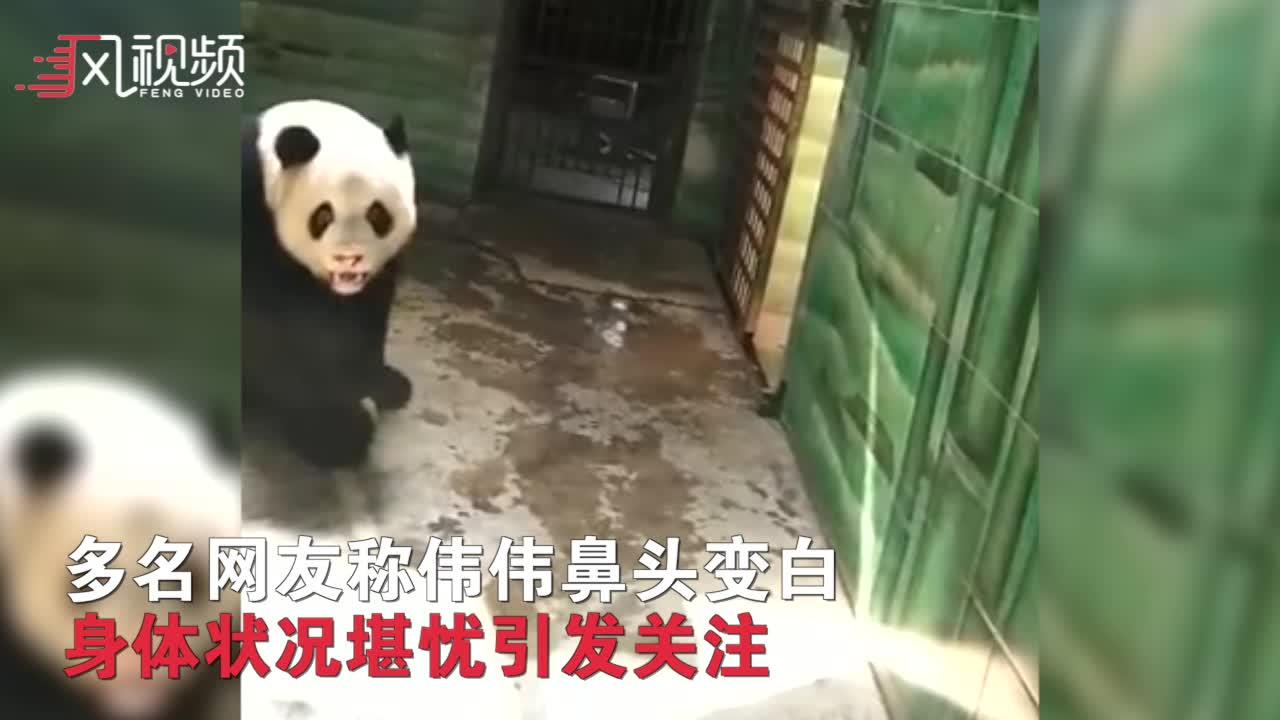 武汉大熊猫被曝遭虐待:饲养员投食区抽烟洗头 34度不开空调