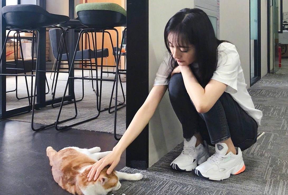 杨幂撸猫动作超熟练,这也太可爱了,网友:有多少人想当那只猫!