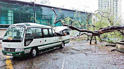 香港大学内塌大树毁车。图片来源:香港《文汇报》。