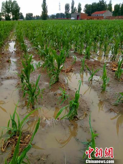 图为:大同市天镇县谷前堡镇遭受风雹灾害。山西省民政厅供图