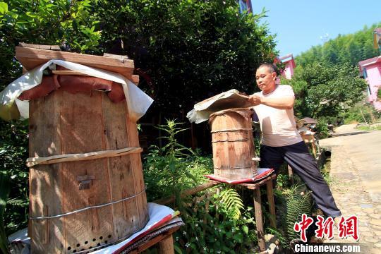 6月16日,闽北顺昌县洋墩乡洪地村村民查看自家房前屋后养殖的蜜蜂。 乐细巾 摄