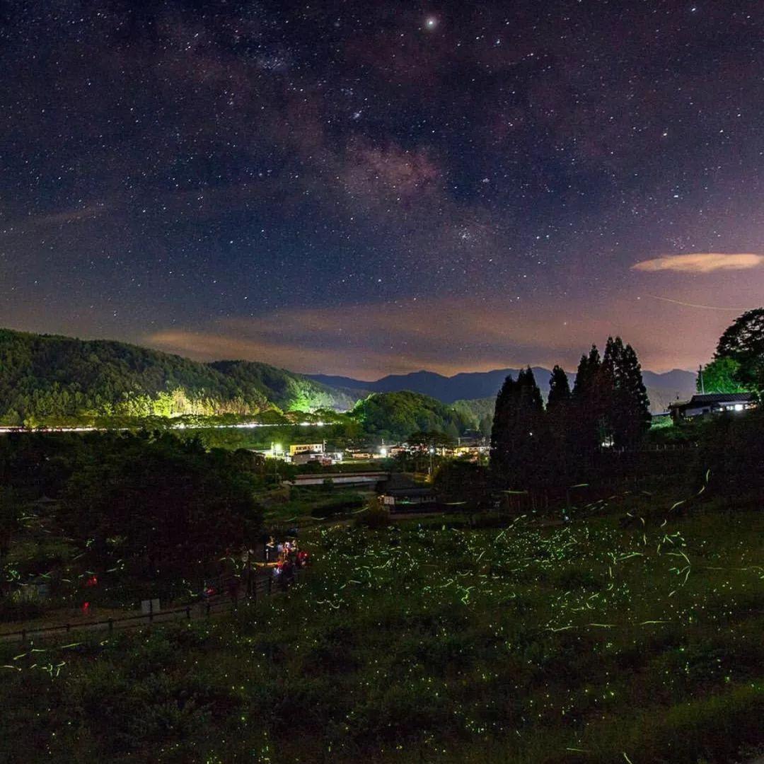 朝思暮想夏天去日本的理由 萤火虫算一个