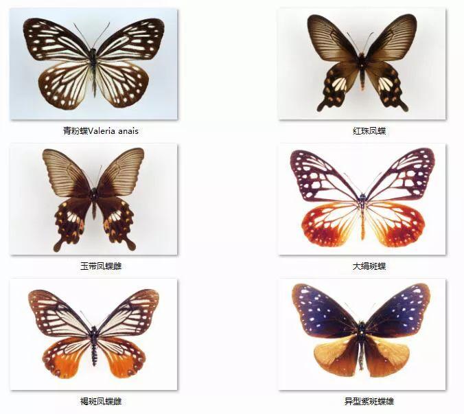 动物眼睛长翅膀