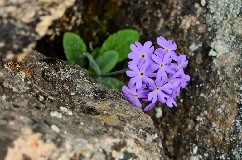 少年科学粉每日一题丨秦岭有哪些珍稀植物你都