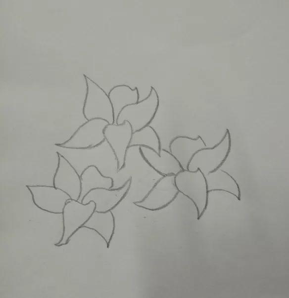 简笔画 | 百合花