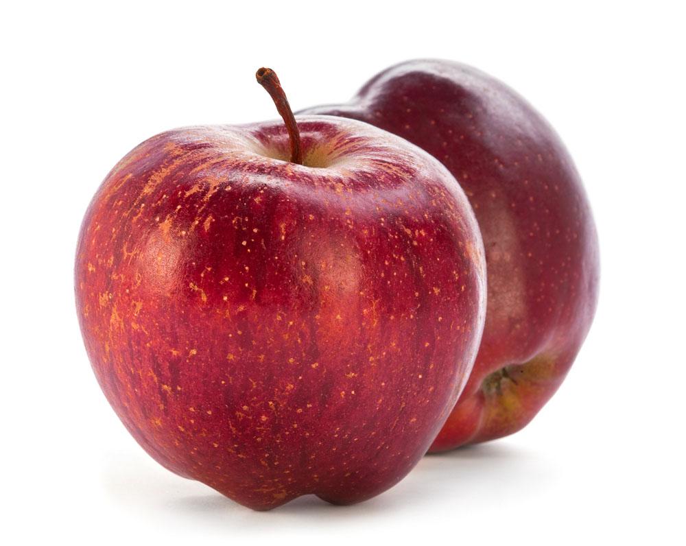 苹果结构图生物
