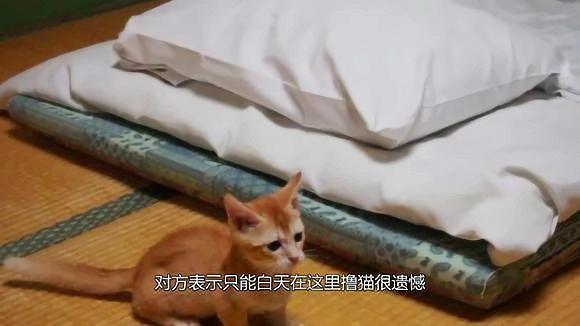 """不但陪吃陪玩还陪睡!日本的""""猫旅馆""""简直是猫奴天堂啊!"""