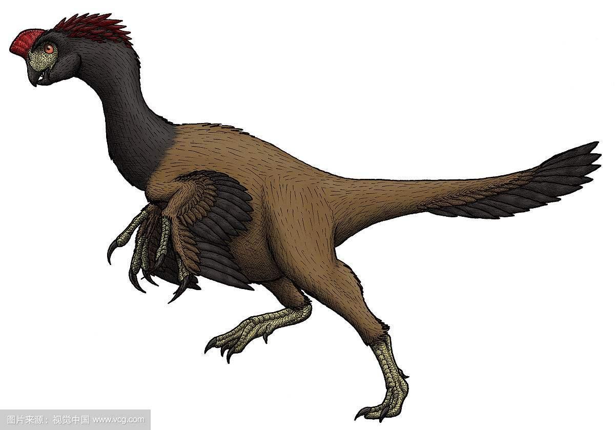 科学家发现一种恐龙和鸟类过度类型,它有锋利的牙齿是