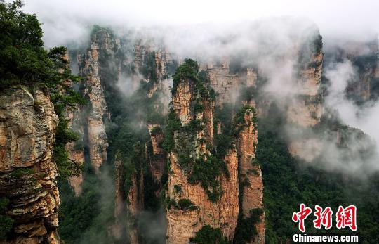 云雾缭绕的张家界武陵源风景名胜区。 吴勇兵 摄