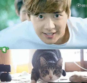 撞脸动物表情的明星,网友:王俊凯赵丽颖的样子绝对会萌到你!
