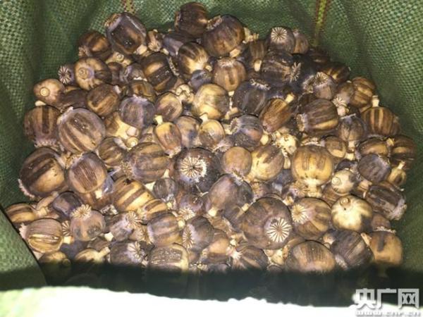云南腾冲查获1.5吨走私金融业发展前景毒品罂粟壳,常在火锅等中非法添加