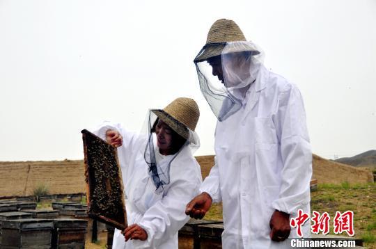 薛志刚和工作人员在蜂箱外观察蜜蜂产出的新蜜。 李佩珊 摄