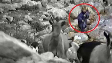 从放羊小娃到队长!28年前莫德里奇放羊画面被无意间记录