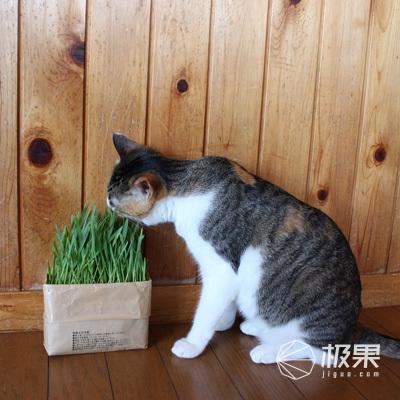 无印良品(MUJI)DIY猫草