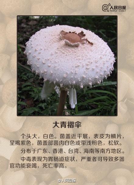 贪吃野蘑菇一家三口中毒 9岁女儿身亡 如何避开毒蘑菇?